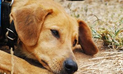 dog-142667_640