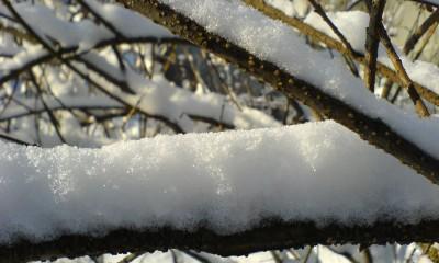 Fresh_snow
