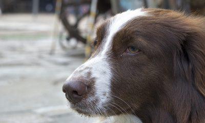 dog-1309894_960_720