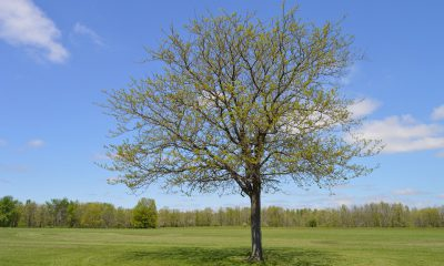 tree-932229_960_720
