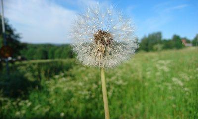 flower-2251198_1280