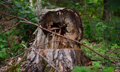 tree-2386169_960_720