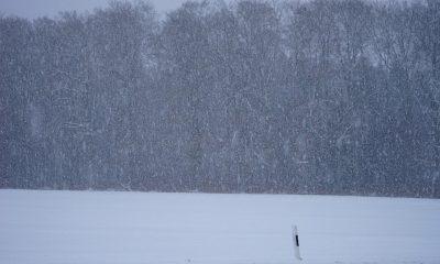 blizzard-1025001_960_720