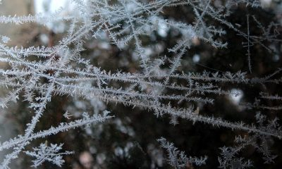 frost-3141525_960_720