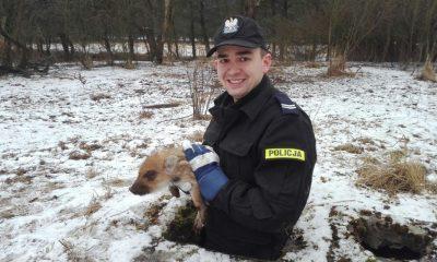 Policjant wyciągnął ze studni małego dziczka (fot. KMP w Toruniu)