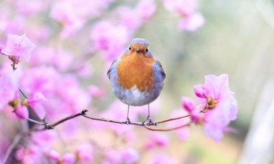 spring-bird-2295436_960_720