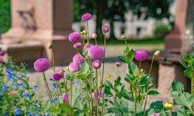 flower-3296346_960_720