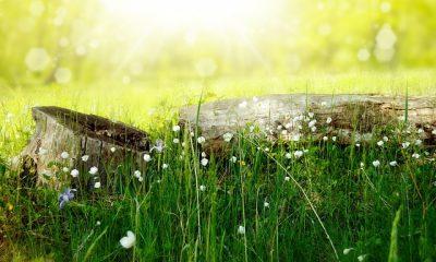 Kolegium Jagiellońskie zaprasza na wiosenny piknik (fot. pixabay)