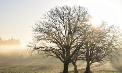 tree-3302855_960_720