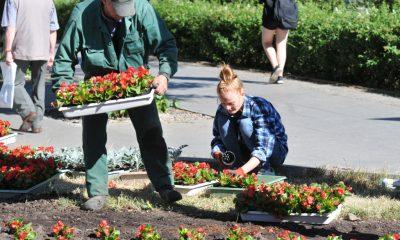 Kwitnący Toruń - trwają prace ogrodnicze (fot. Małgorzata Litwin/torun.pl)