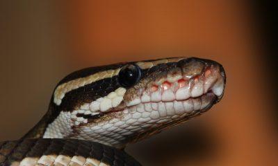 snake-601831_960_720