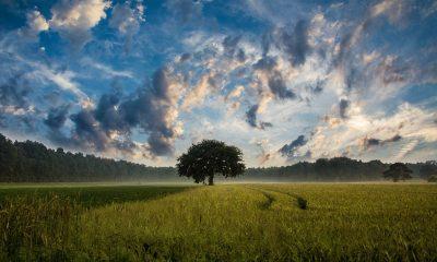 tree-247122_960_720
