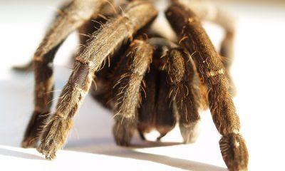 spider-1552965_960_720