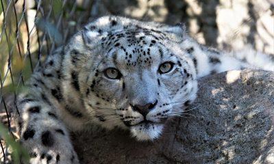 wildlife-3229940_960_720