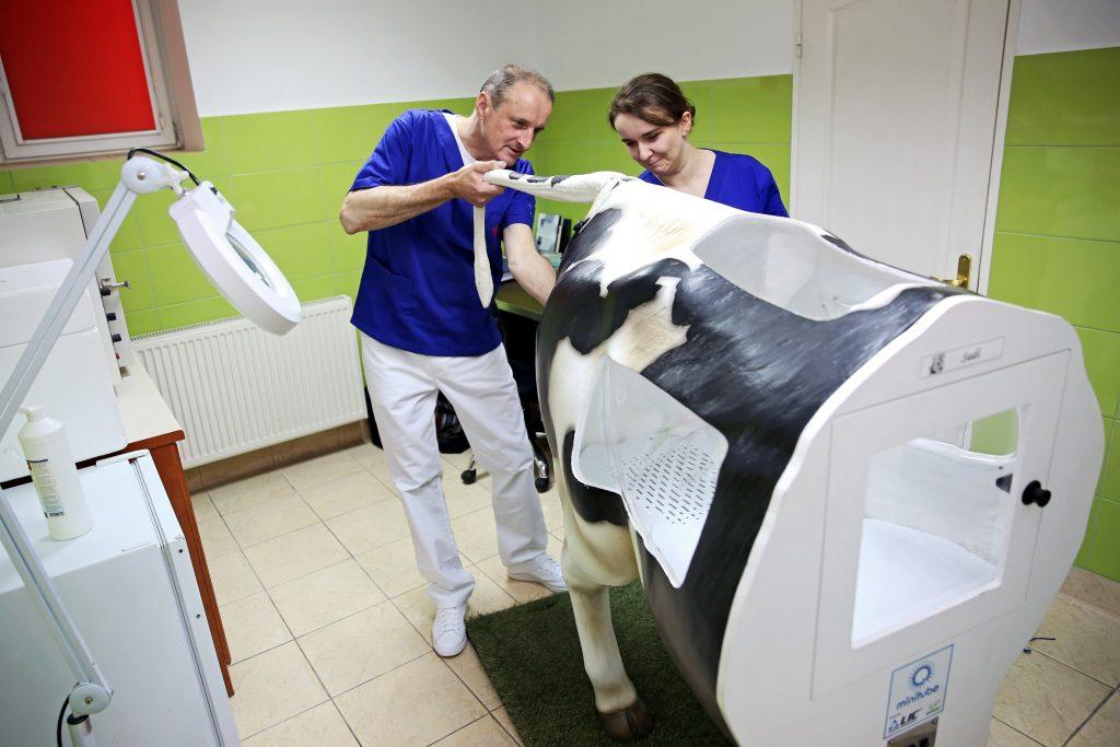 (fot. Andrzej Romański/Dział Promocji i Informacji UMK)
