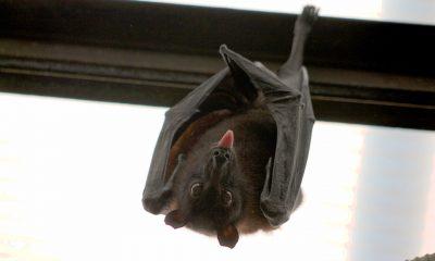 bat-1268650_960_720