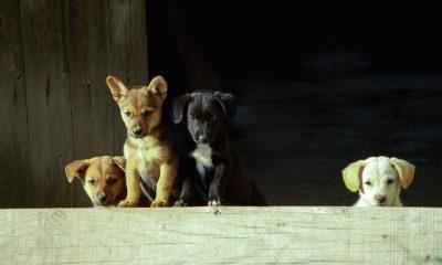 dog-3286094_960_720