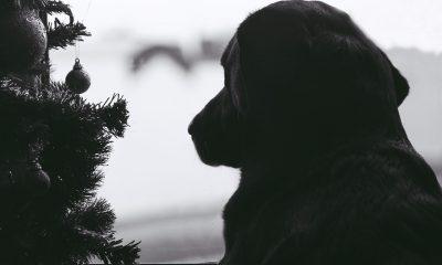 dog-1115700_960_720