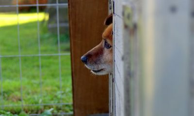 animal-shelter-1558651__340