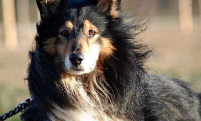 Pomóż zwierzakom ze schronisk we wiosennych porządkach_foto