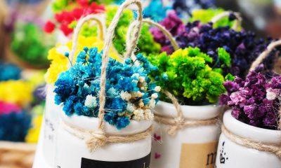 flowers-3428201_960_720