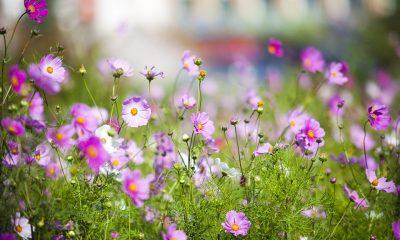 grassland-2102422_960_720