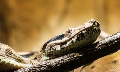 snake-1522257_1920