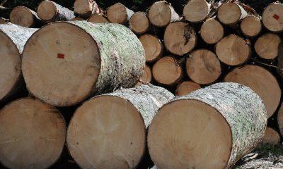 wood-456195_960_720