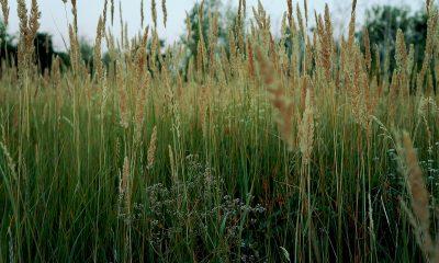 grass-1786583_1920