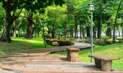 park-with-wooden-pathway-benches_1137-254